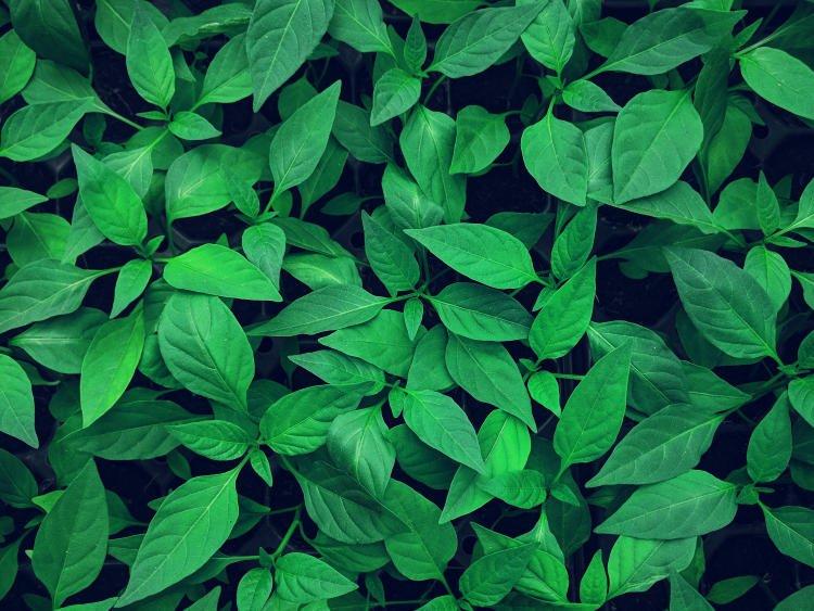 Generali Investments green bond